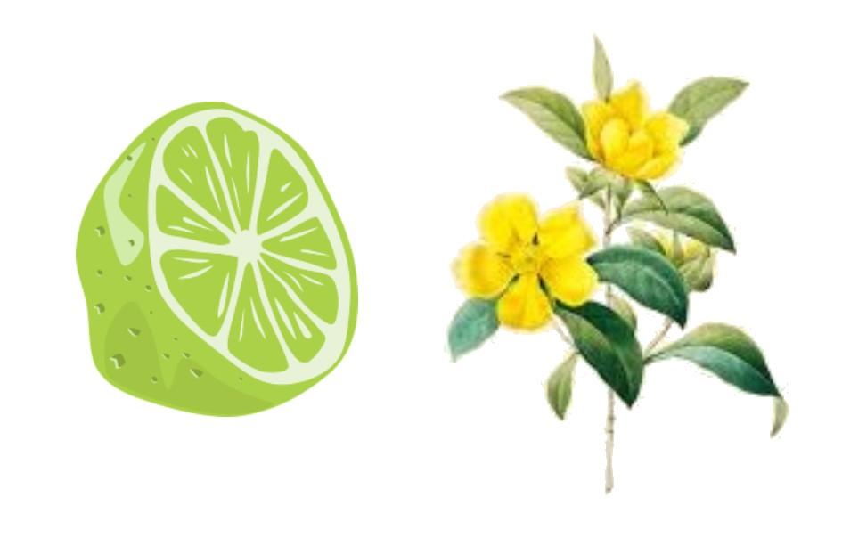Lime-Jasmine